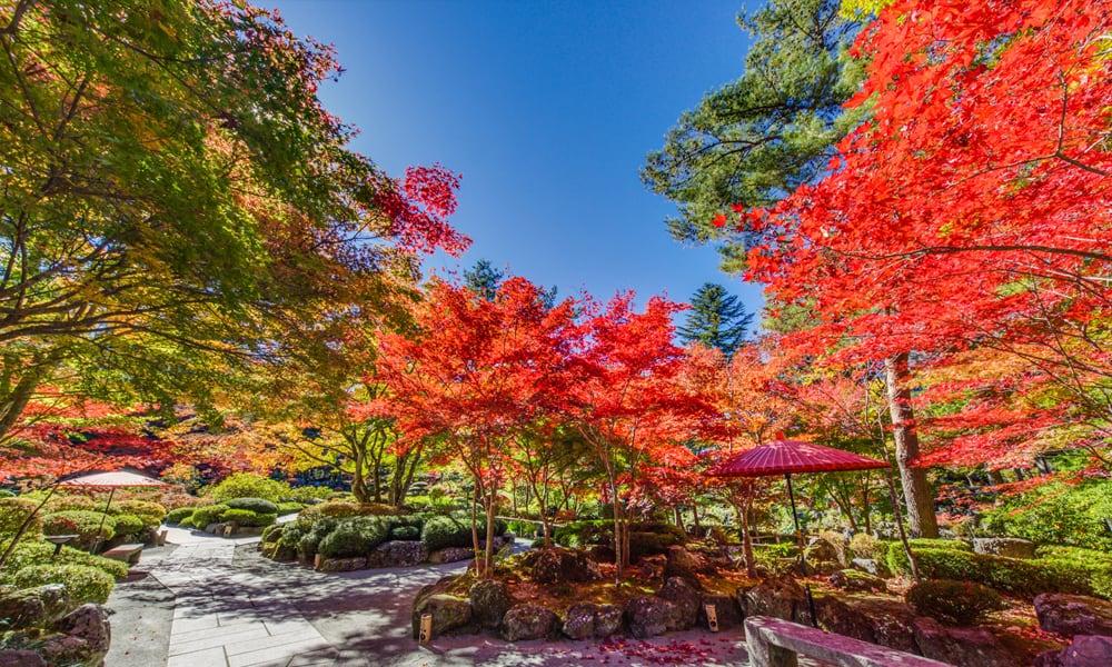 秋の庭園・紅葉の様子